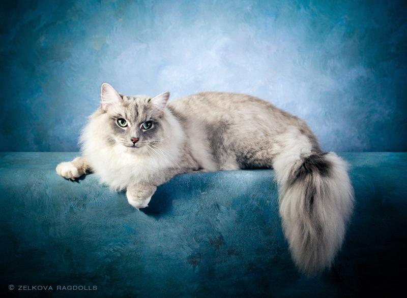 cat grooming milwaukee