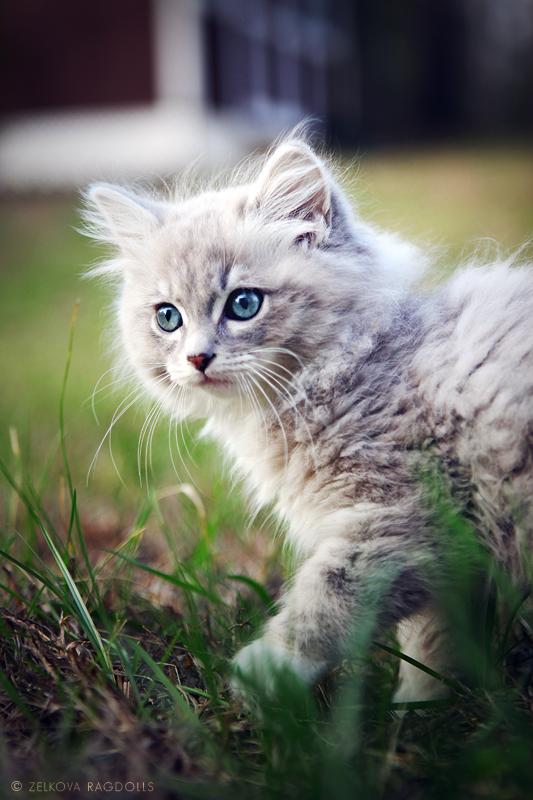signs of a sick kitten
